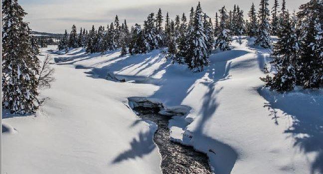 2018 Ringsakerfjellet  2