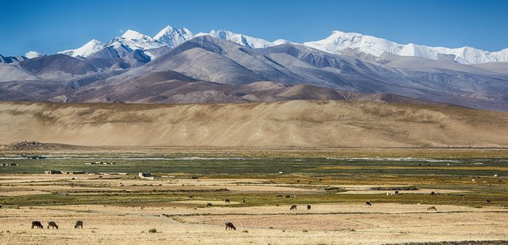 Village And Grazing Yaks In Tibet In Front Of The Himalayas Main Range With Mt. Everest And Cho Oyu.
